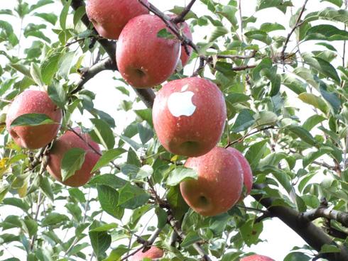 manzana-arbol