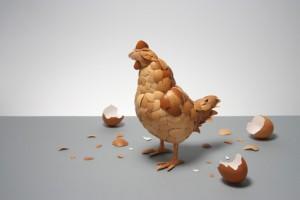 gallina cascara huevo